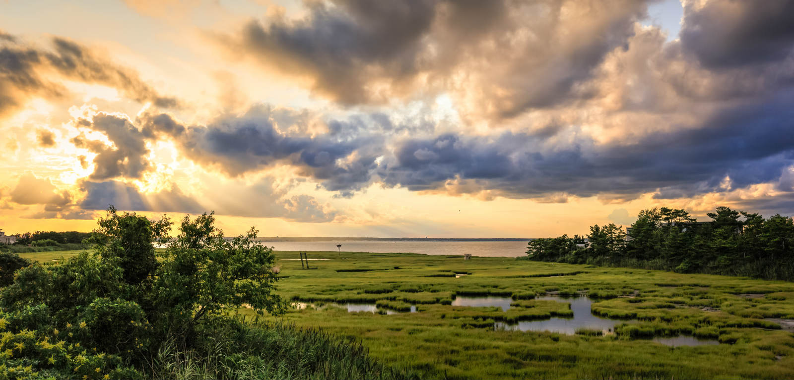 salt marsh and bay greg molyneux
