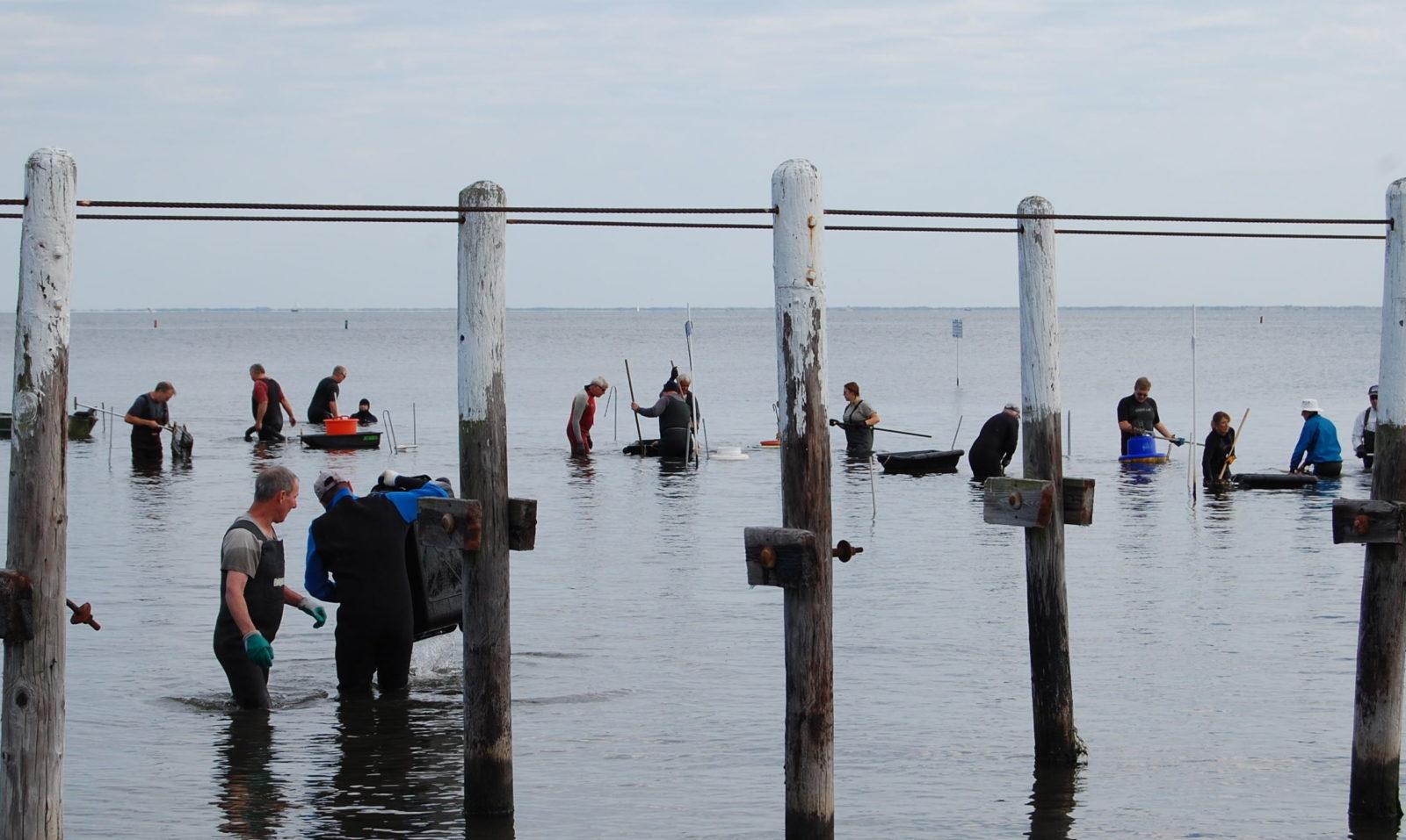 About barnegat bay partnership barnegat bay partnership for Barnegat bay fishing