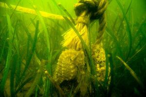 photo of eelgrass